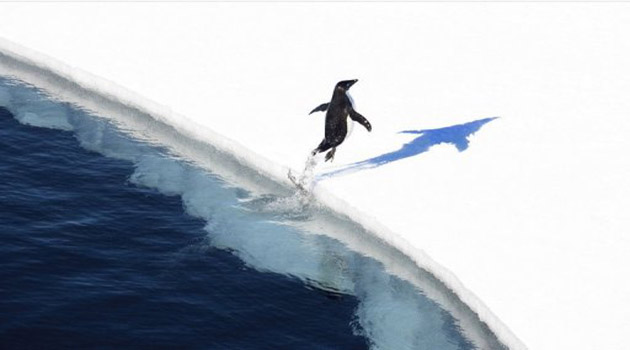 A peguin lands on the ice in Antarctica, November 1, 2011/AFP