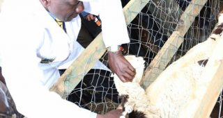 Deputy President launches Sh8 billion fund for pastoral counties