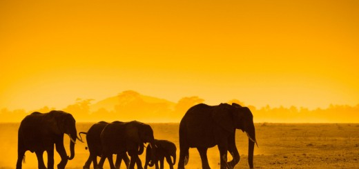 wallpaper-with-elephants-at-sunset