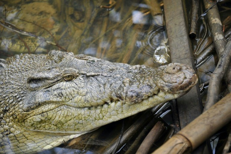 afp-indonesia-plans-crocodile-guarded-prison-island-for-drug-convicts