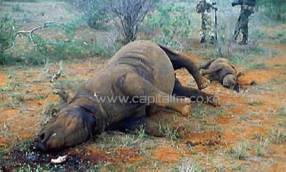 A dead rhino and calf killed by poachers/AFP