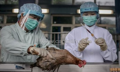 Officials test poultry on the border with mainland China, in Hong Kong, on April 11, 2013, as authorities step up measures against the spread of the deadly H7N9 bird flu/AFP