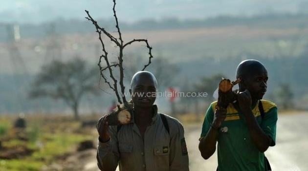 File photo: South African mine workers walk home with fire wood in Carletonville/AFP