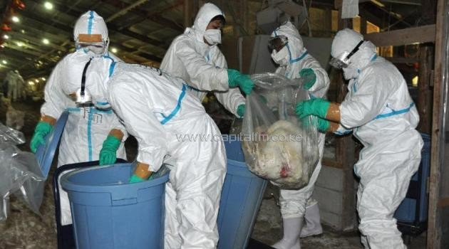 Handout picture taken by Miyazaki prefecture government on December 16, 2014 shows health officers slaughtering chickens at a poultry farm in Nobeoka city in Miyazaki prefecture/AFP