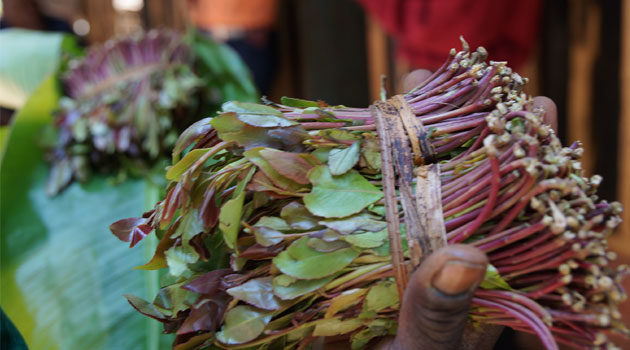 Though it is well known that miraa drivers flout crucial traffic rules and ignore the common sense of decency on the roads, not many miraa users are willing to pull down their tower of cards/MUTHONI NJUKI