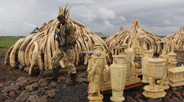 """If we catch the big guys we can really deal with them. But catching them is a little bit difficult and we are moving more to intelligence-based operations rather than patrolling,"" he said as the country prepared to set ablaze 105 tonnes of ivory and 1.35 tonnes of rhino horn/FILE"