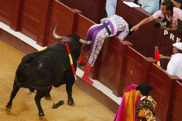 Bull fighter Marcos Galan has his testicles raptured by the bull horn.