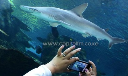 A visitor takes pictures of a whitetip shark at an aquarium in California/AFP