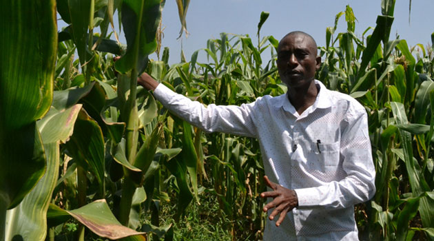MAIZE-BARINGO