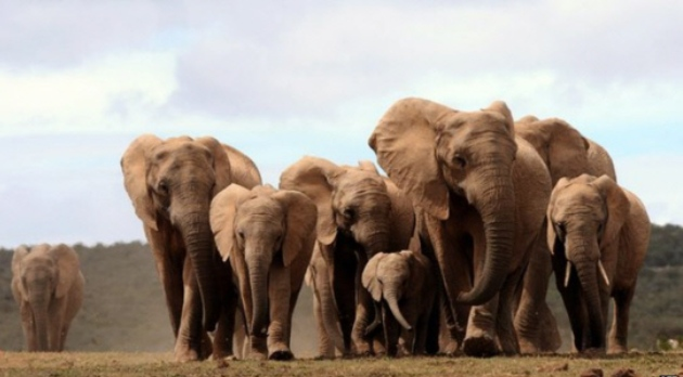 With some 300 elephants, countless birds and crystal-clear warm springs 31°C all year round, Yankari should be raking in cash/AFP