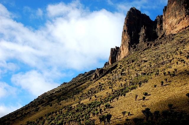 10000 trees to be planted in Mt Kenya photographed by Susan Wong