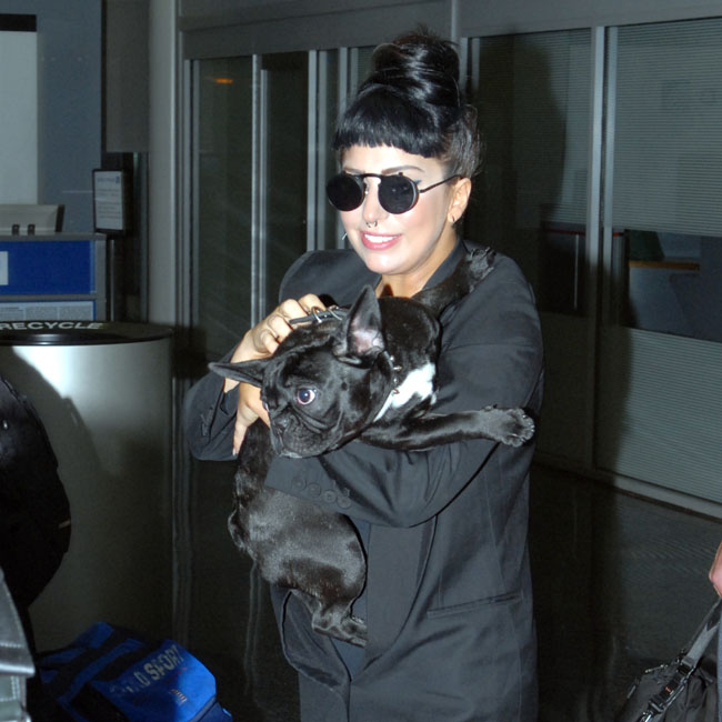 "Lady Gaga returns home from Australia and is greeted by... her dog, ""Asia the Bat Pig"""