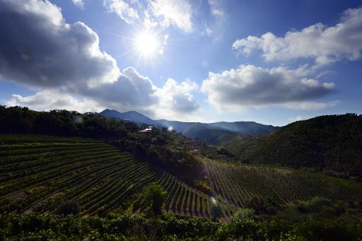 italy wine country
