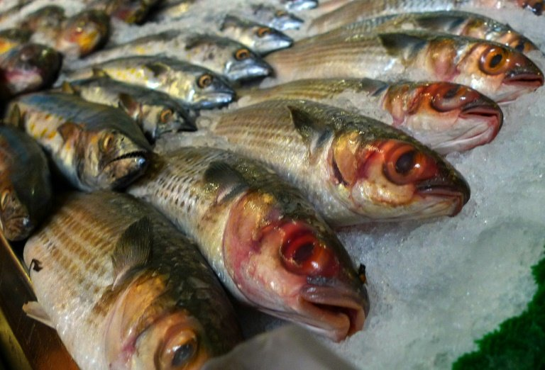 afp-pollutants-in-fish-may-prevent-humans-from-expelling-toxins