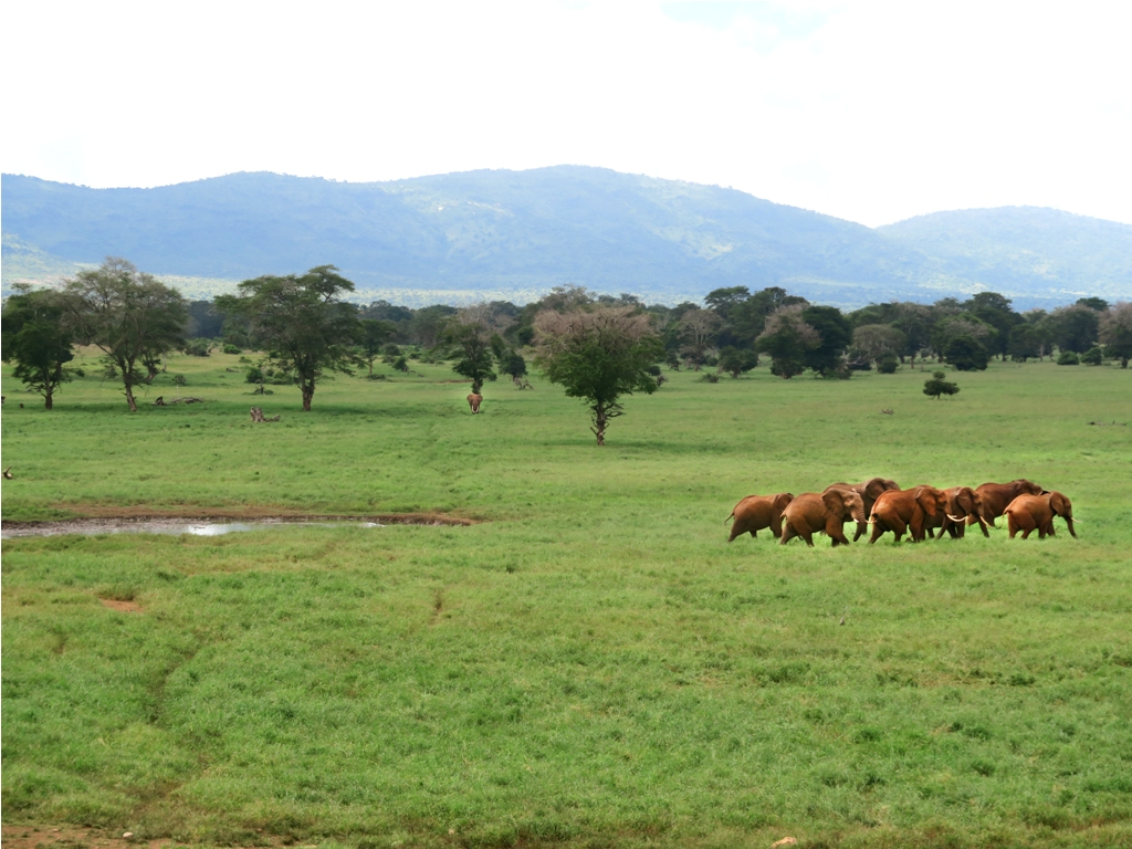 PHOTO: Taita hills sanctuary, Tsavo West National Park / Susan Wong