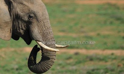 Rhinos and elephants are already listed as protected species and their international trade is banned/FILE