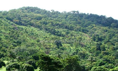 According to the World Rainforest Movement, Kenya's forests had been rapidly declining due to pressure from increased population, fuel wood, building material and other land uses/FILE
