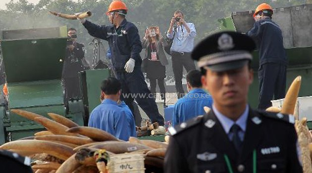 Ivory being confiscated by authorities/FILE