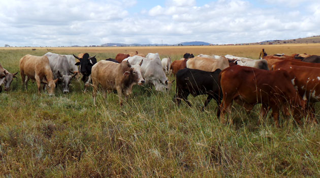 The two pastoralist communities who engage in cattle rustling that often results in the loss of human life have also agreed to pay back double the number of animals stolen/FILE
