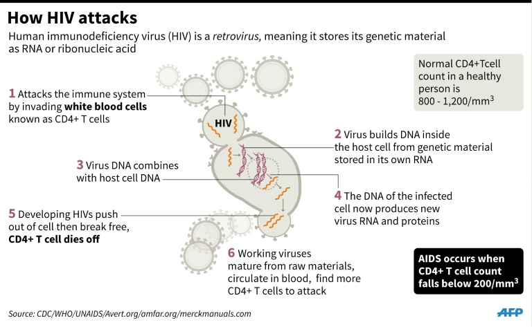 Graphic on how HIV attacks white blood cells